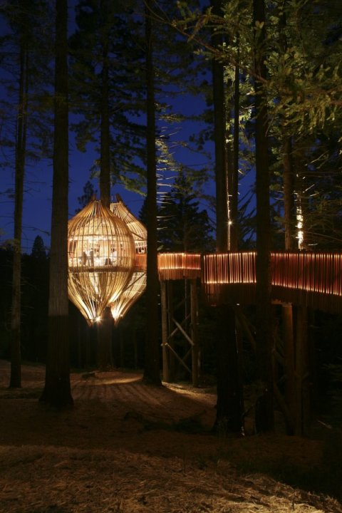 the-yellow-treehouse-restaurant